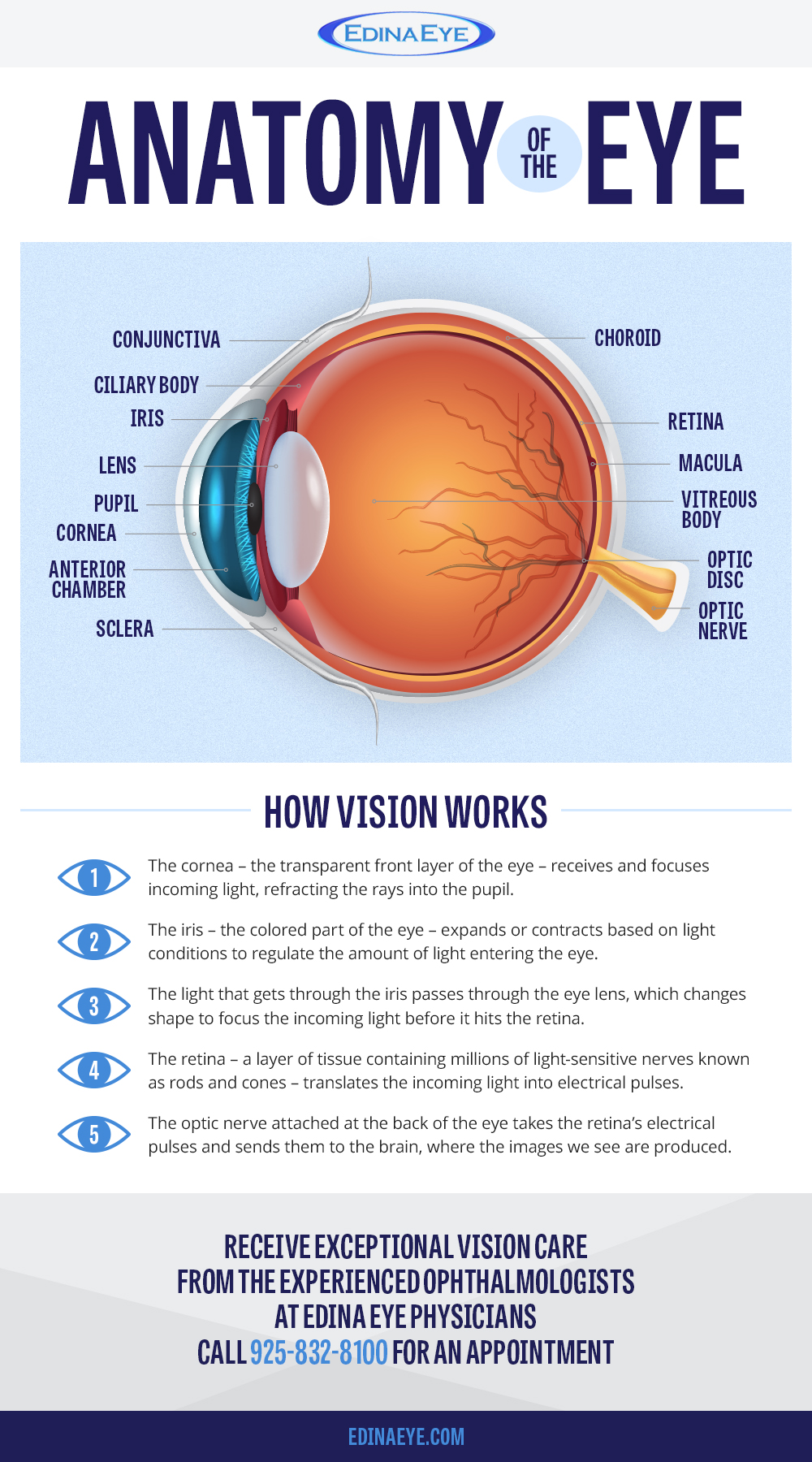 The Eye and How It Works | Edina Eye Physicians